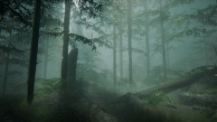 Realistic Foggy Forest Scene