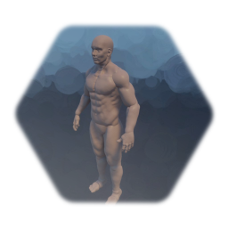 Anatomy male base