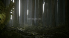 BETWEEN LINES - AMBIENT FOREST SCENERY - 002