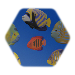 Angel fish Collection