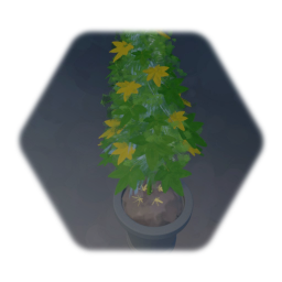 New weed