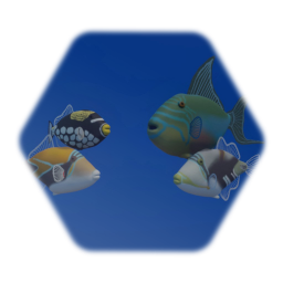 Trigger Fish Collection