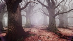 Autumn forest in the fog valley