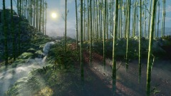 Tranquil Bamboo